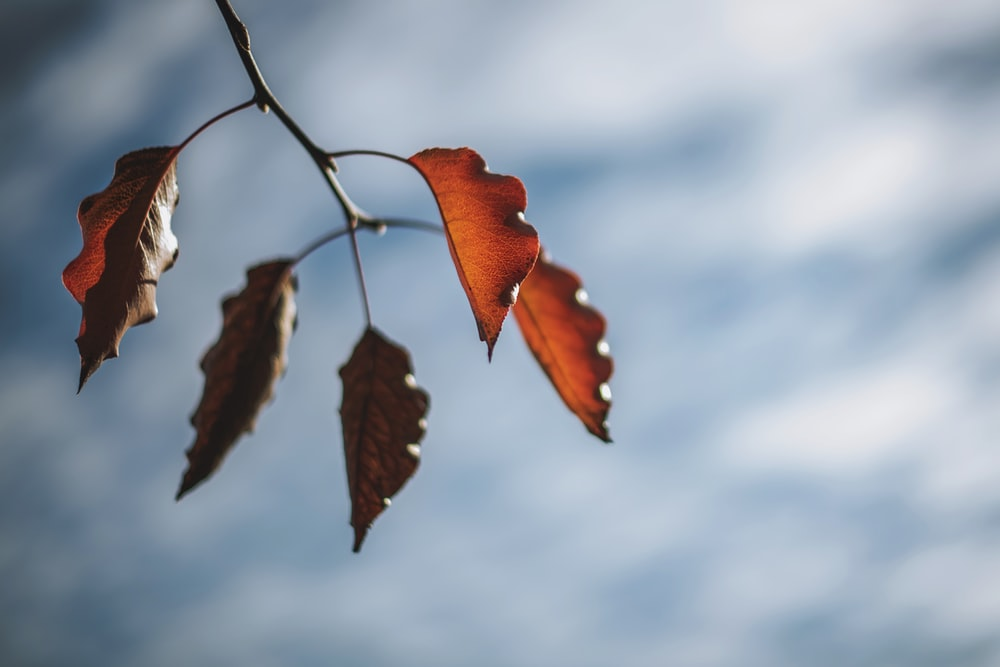 focus photography of brown leaves