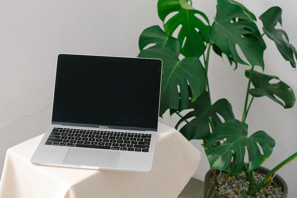 MacBook Pro beside green-leafed plant