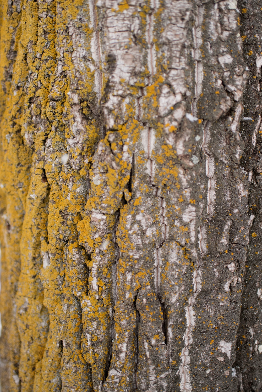 bark of tree