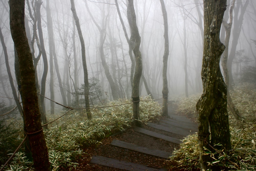 grey fog covering the trail pathway at the woods