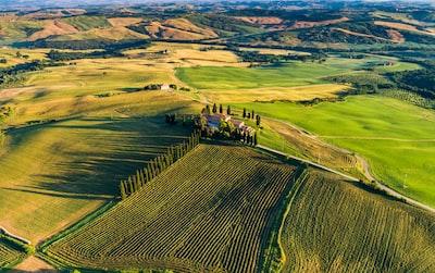 4682. Bor,szőlő, borászatok
