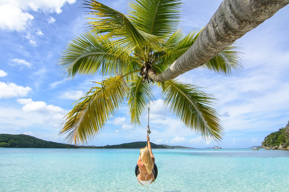 woman hanging on coconut tree at sea