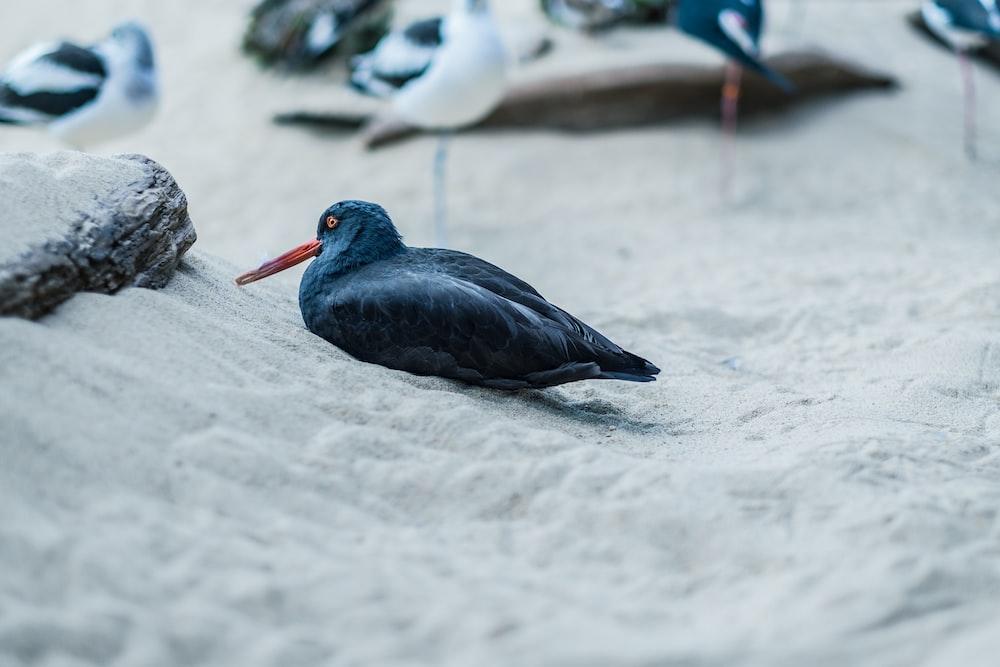 shallow focus photo of black bird