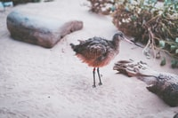 black and brown bird figurine