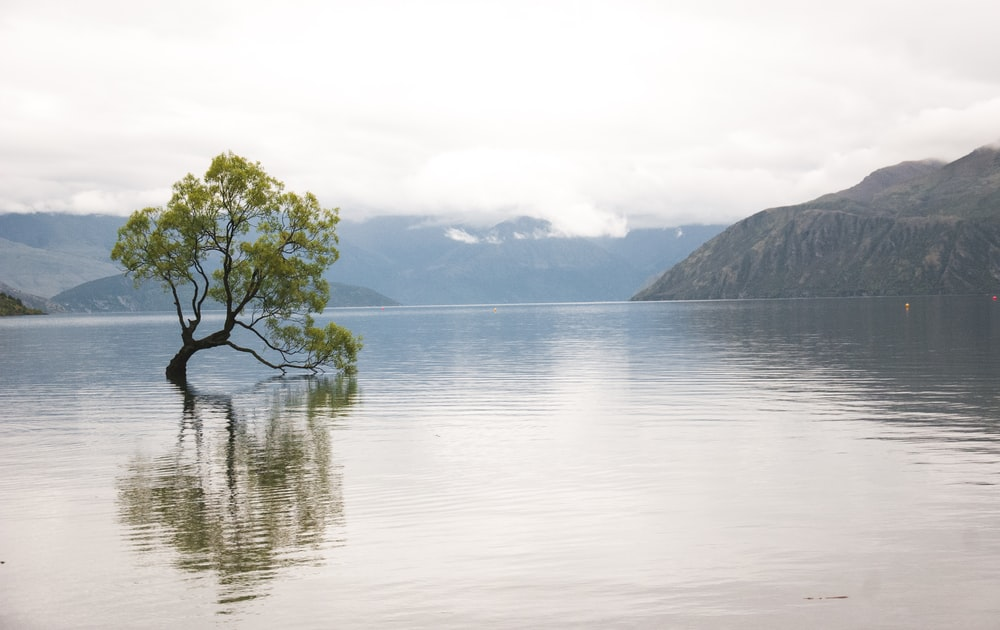 green-leafed tree on calm water