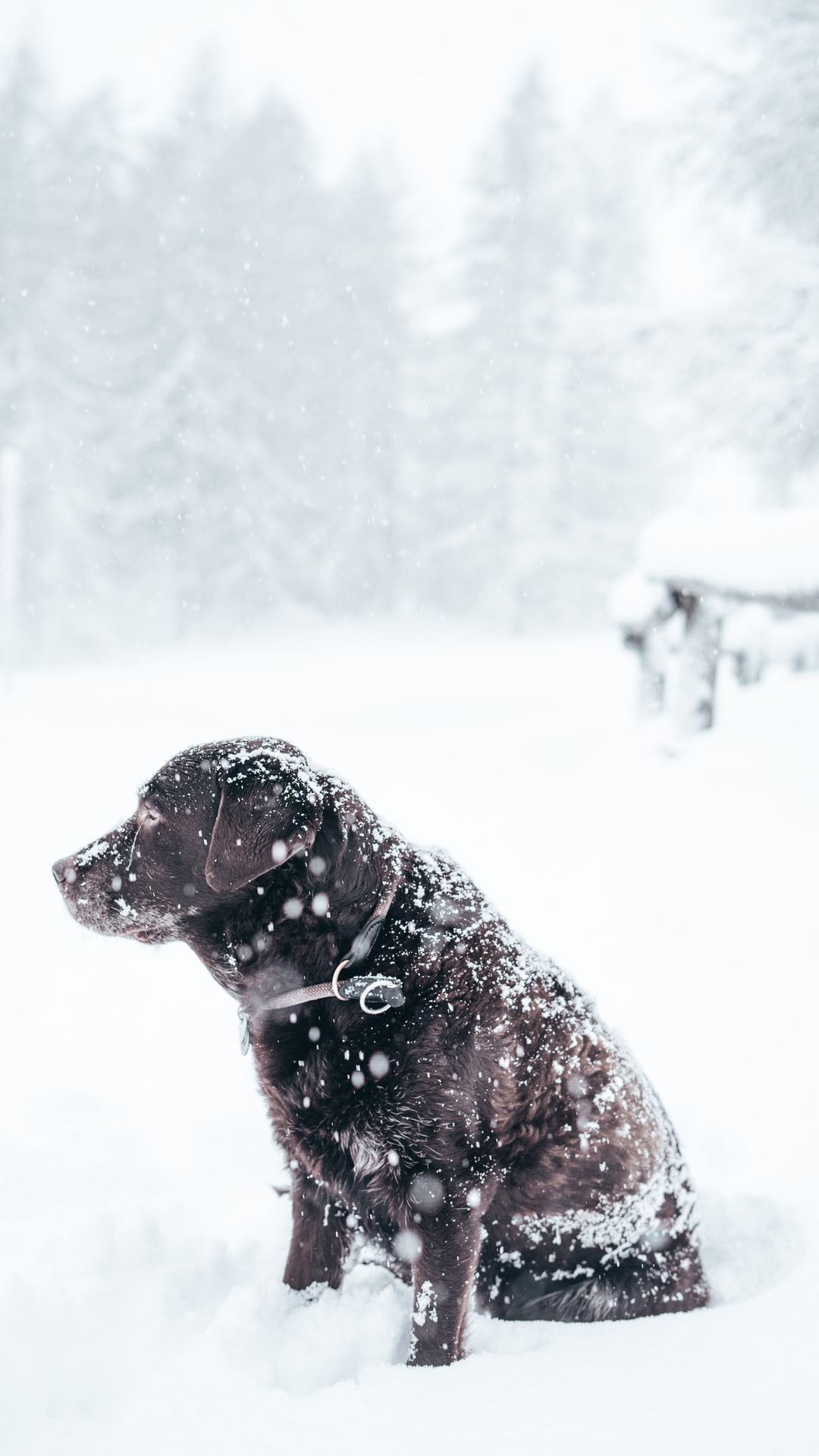How to keep dogs warm outside: 10 Tips For Cold Weather