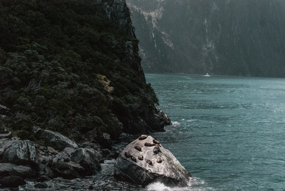 rock formations near body of water at daytime