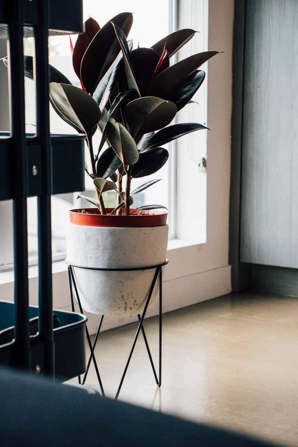 green-leafed plant on white pot inside house