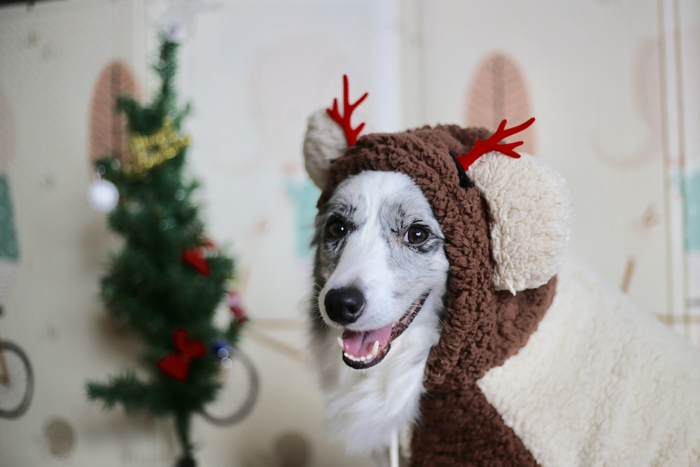 Christmas Dog.Christmas Dog Pictures Download Free Images Stock Photos