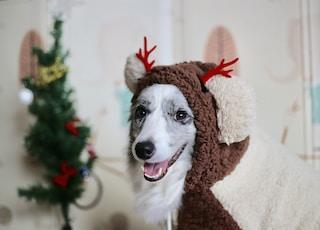 adult short-coated white dog wearing brown coat