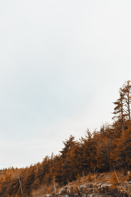 brown trees during daytime