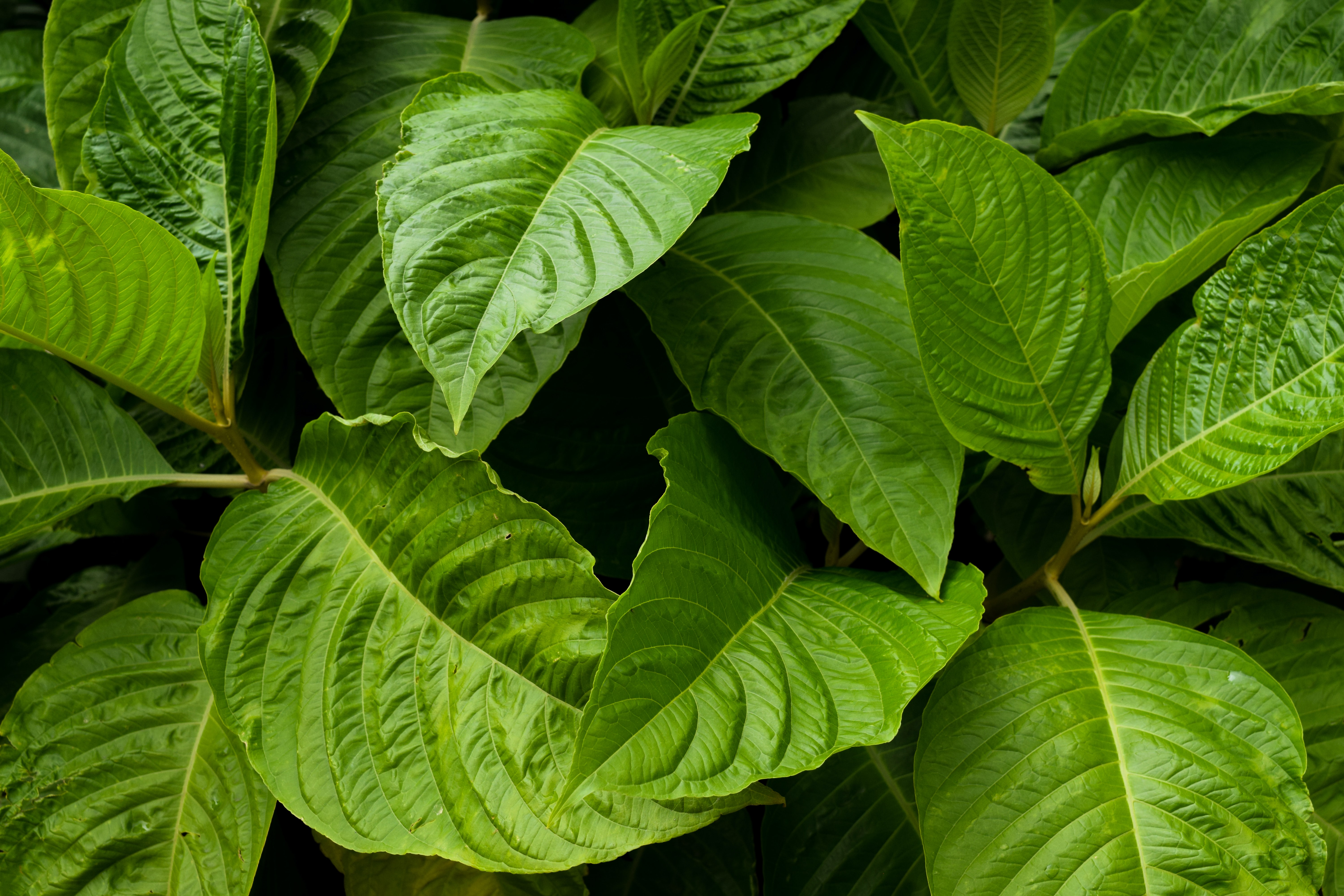green leaf plant in brown pot