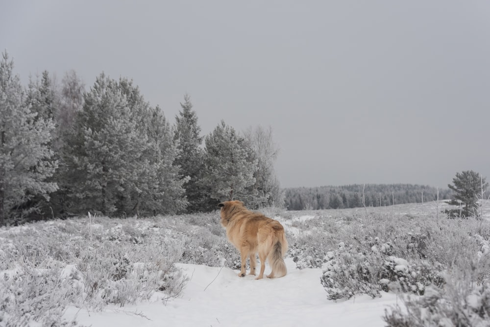 brown dog standing on snow covered grass