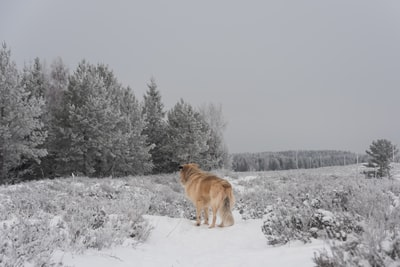 brown dog standing on snow covered grass estonia teams background