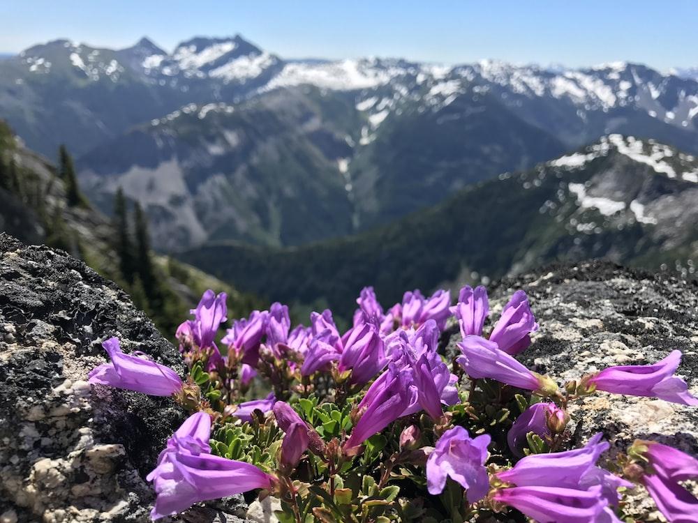 bell-shaped purple flowers