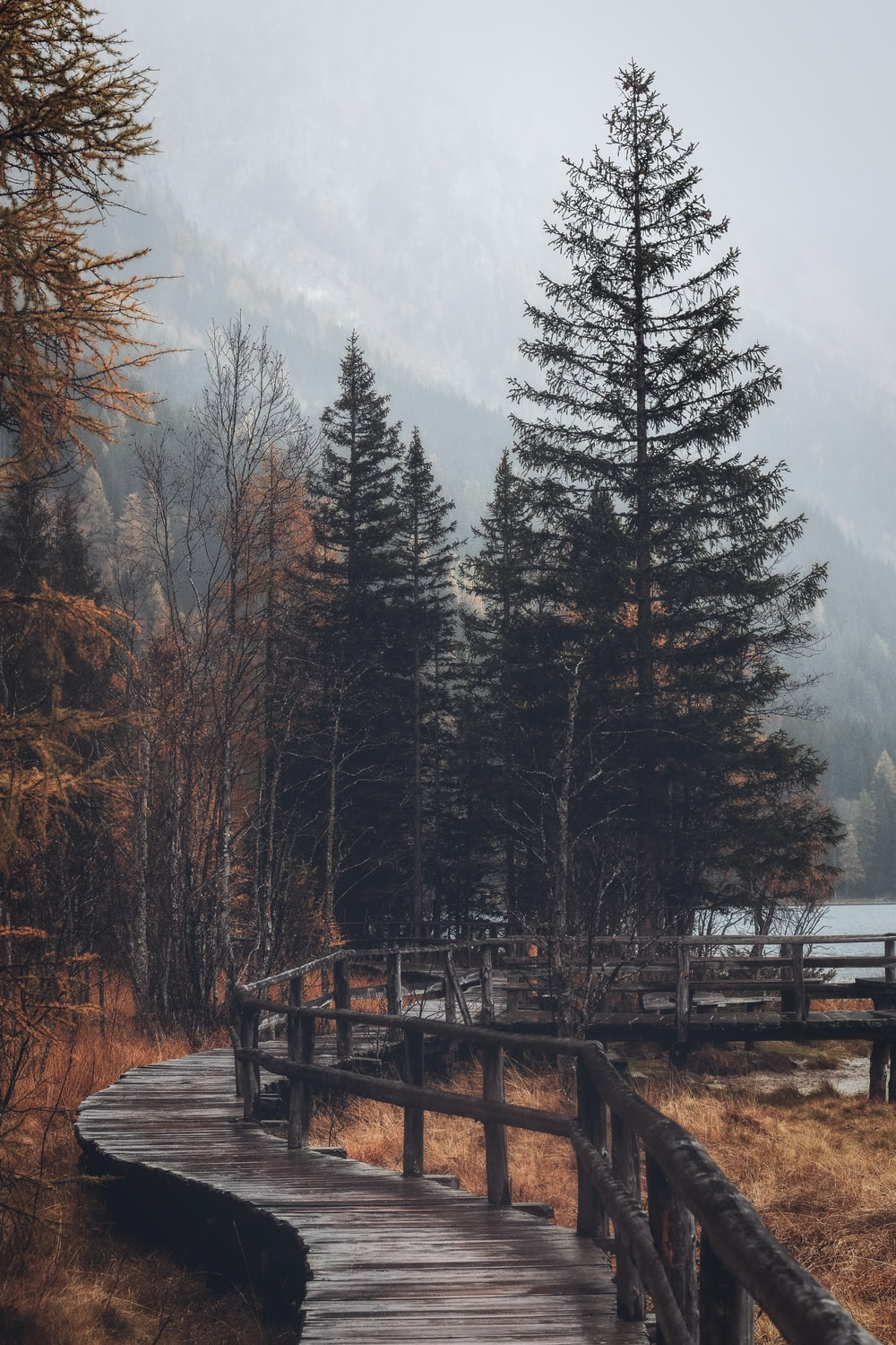 brown wooden pathway with trees under foggy weather