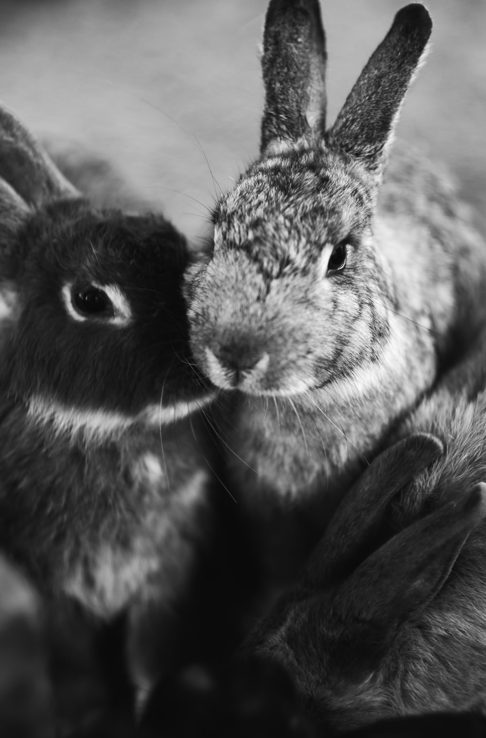 grayscale photography of rabbits