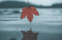 leaf on body of water