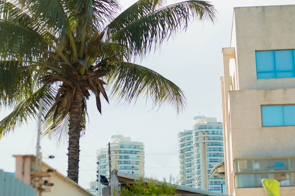 coconut tree near building at daytime ]