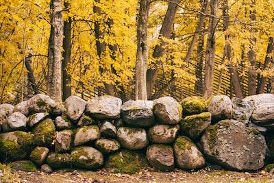 rock wall near brown leaf trees