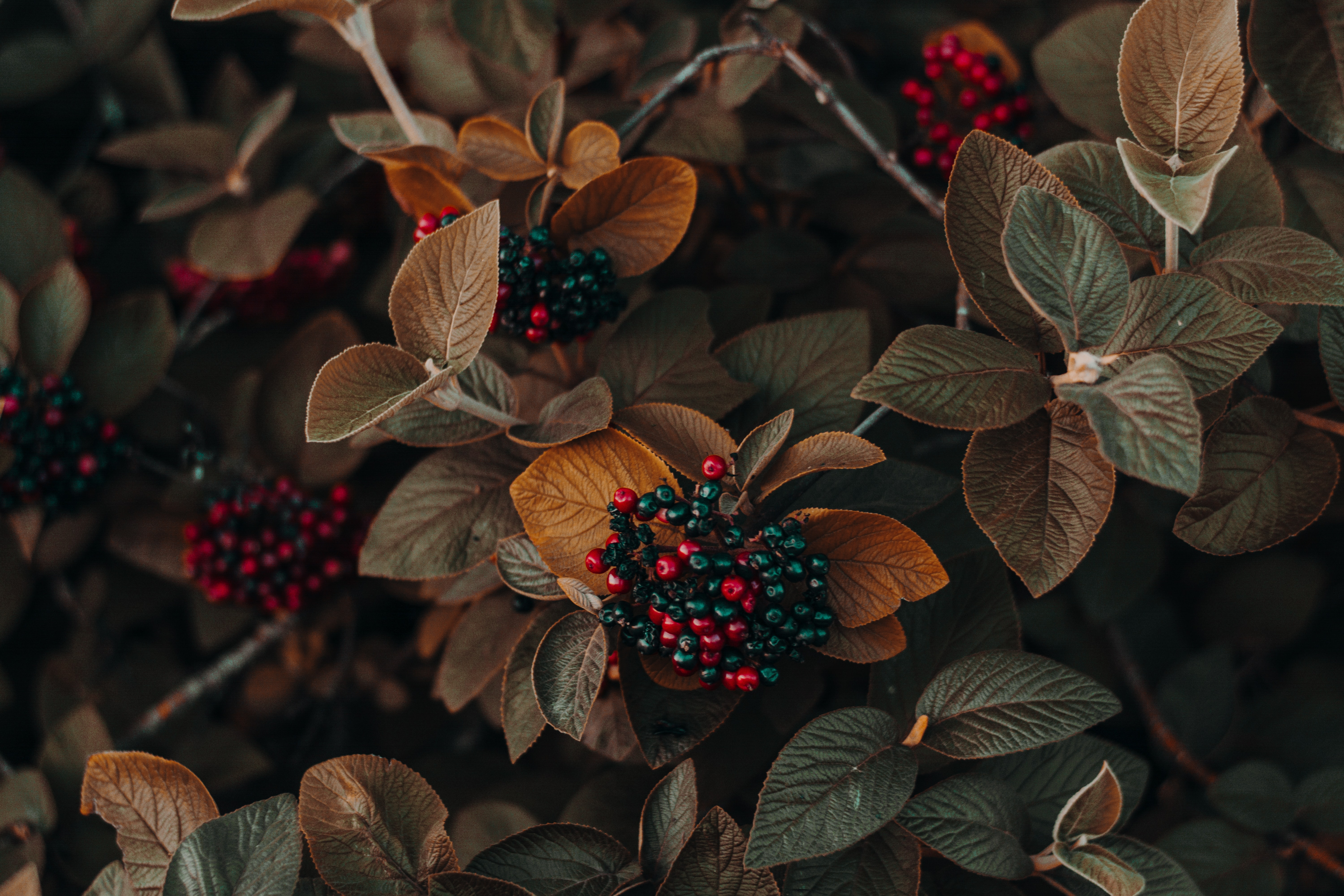 green and red leaf plant