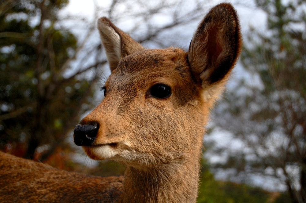 brown deer in close-up photography