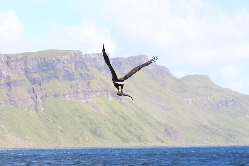 eagle flying on sea