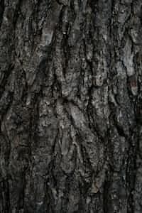 🍃ᒪIᛕᗴ ᗩ 丅ᖇᗴᗴ🍃                                            ✨ ~ fяσм єиιgмα ~✨                                 tree stories