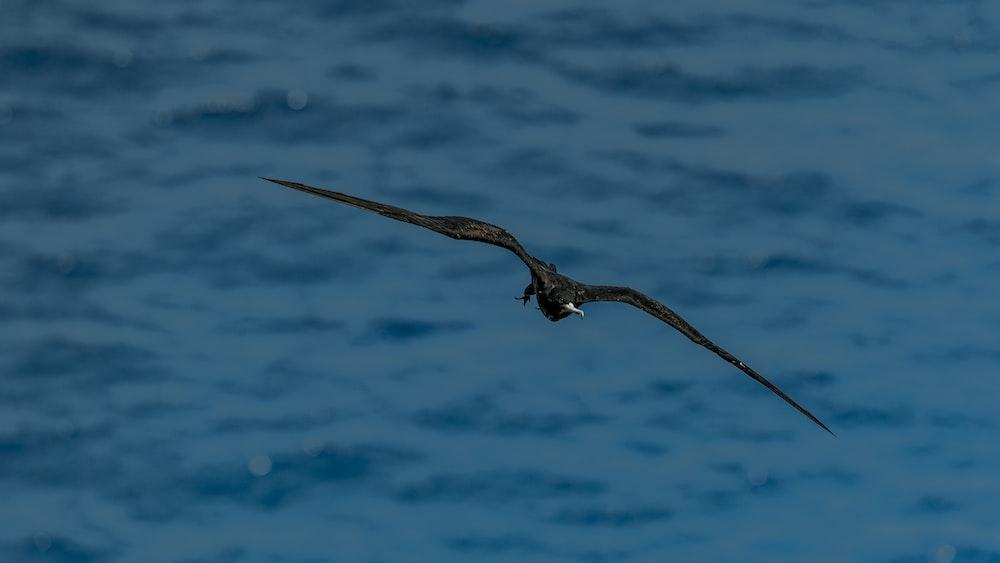 black eagle on air