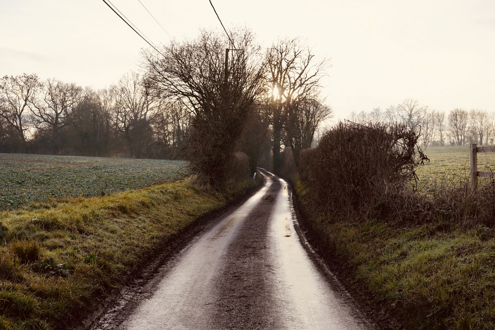 soil road beside bare trees during day