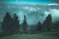 tall trees in front of clouds