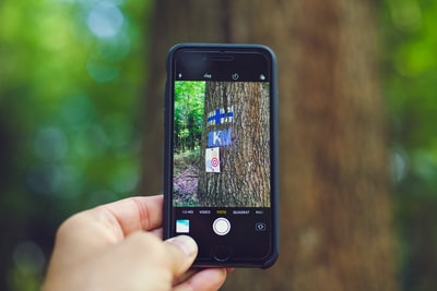 person taking photo of tree using space gray iPhone 6