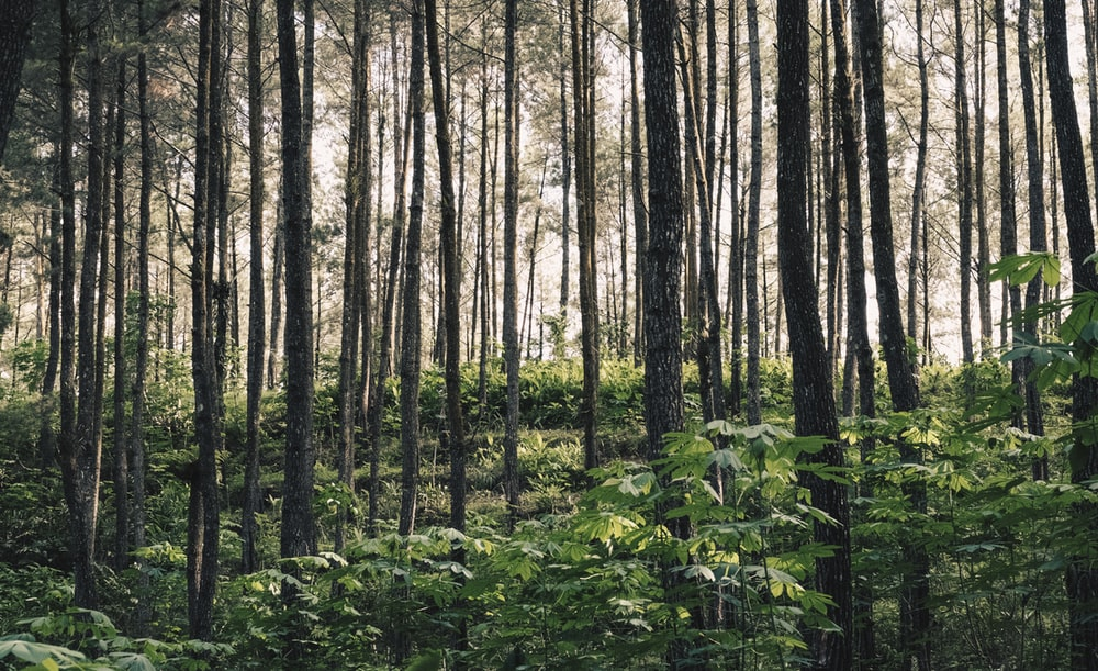 landscape photography of green plants under tall trees in forest