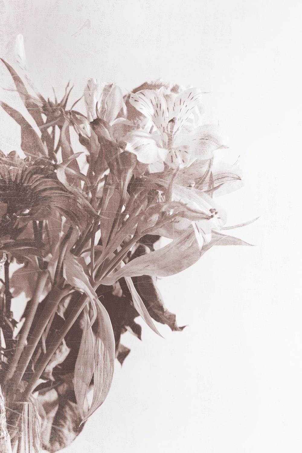 petaled-flower photo