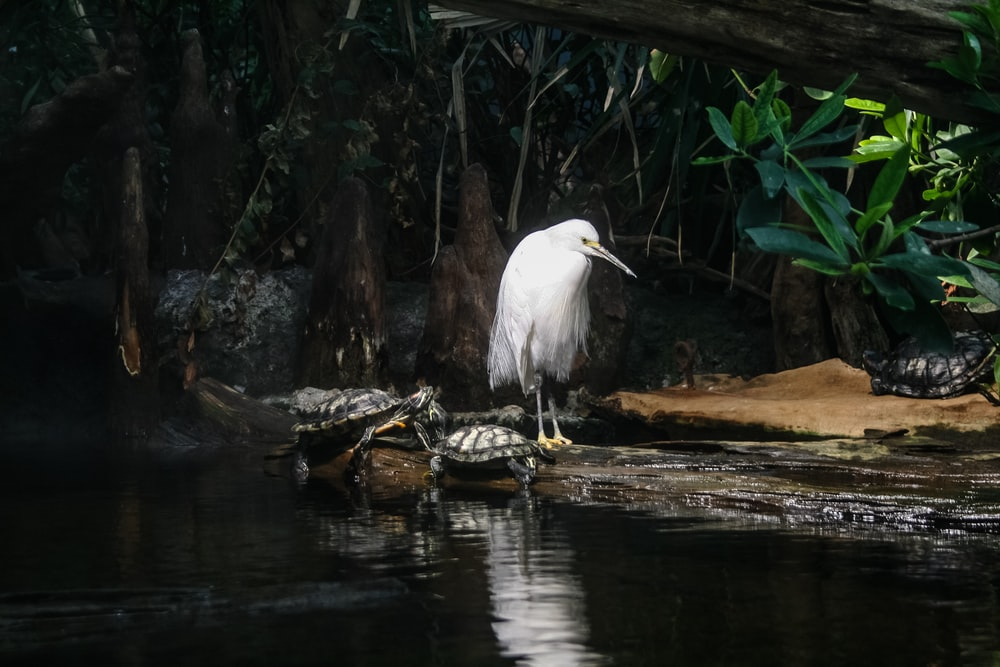 white bird and two turtles