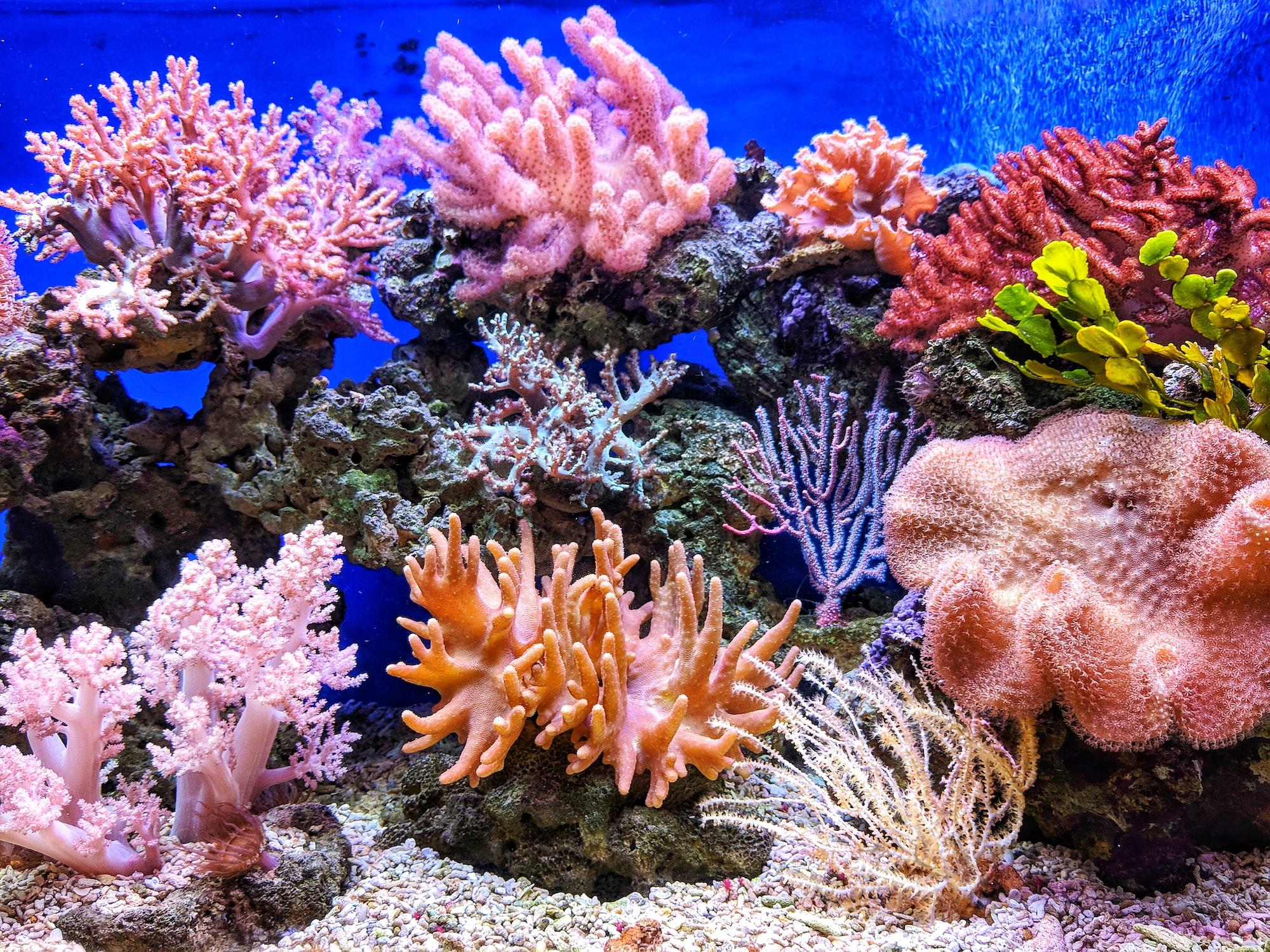 35: Algae blooms, floor sleeping, and corals