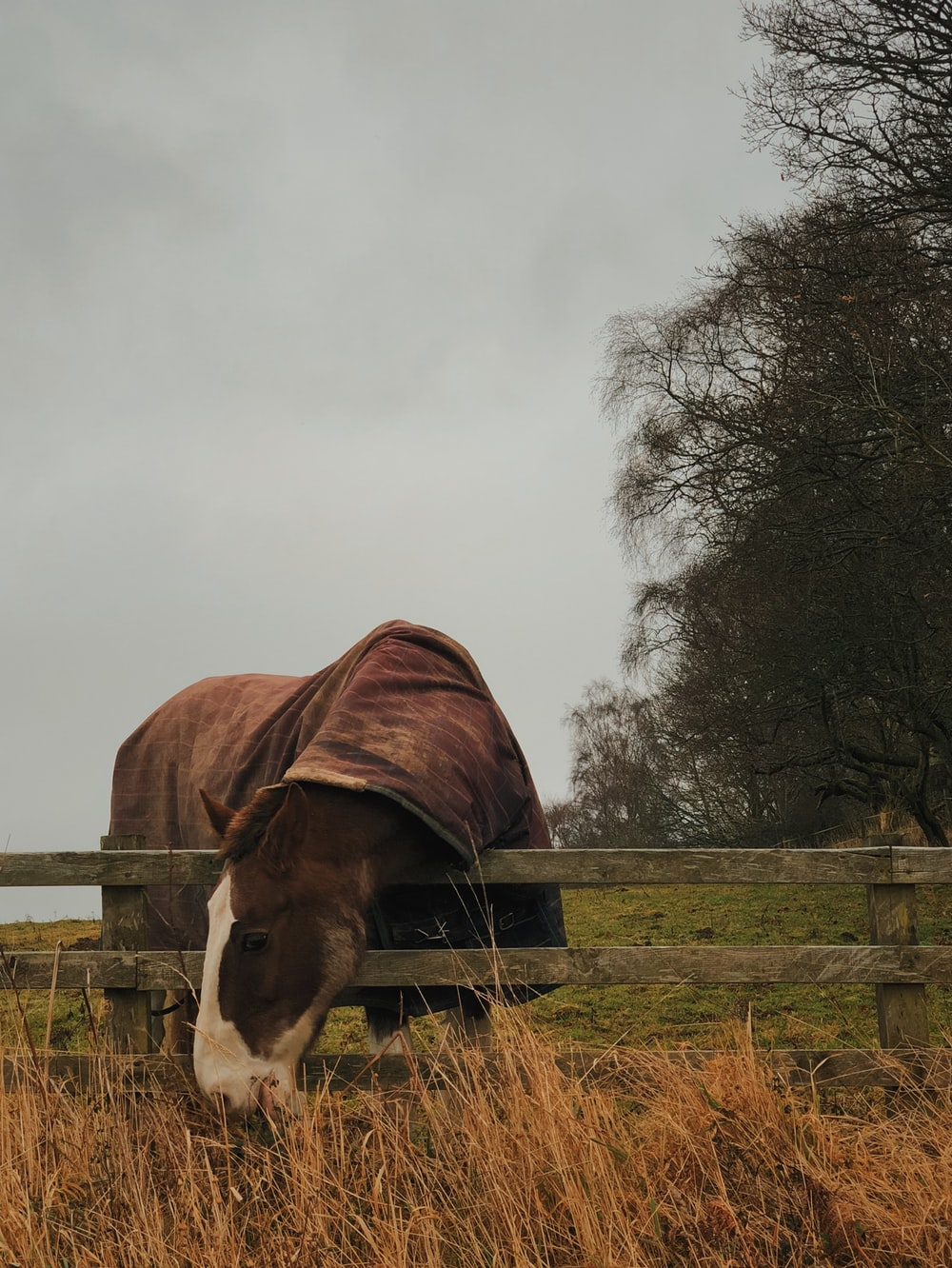 brown horse covered with brown scarf