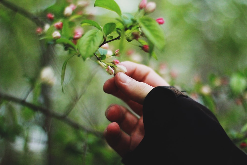 person picking petaled flower selective focus photography