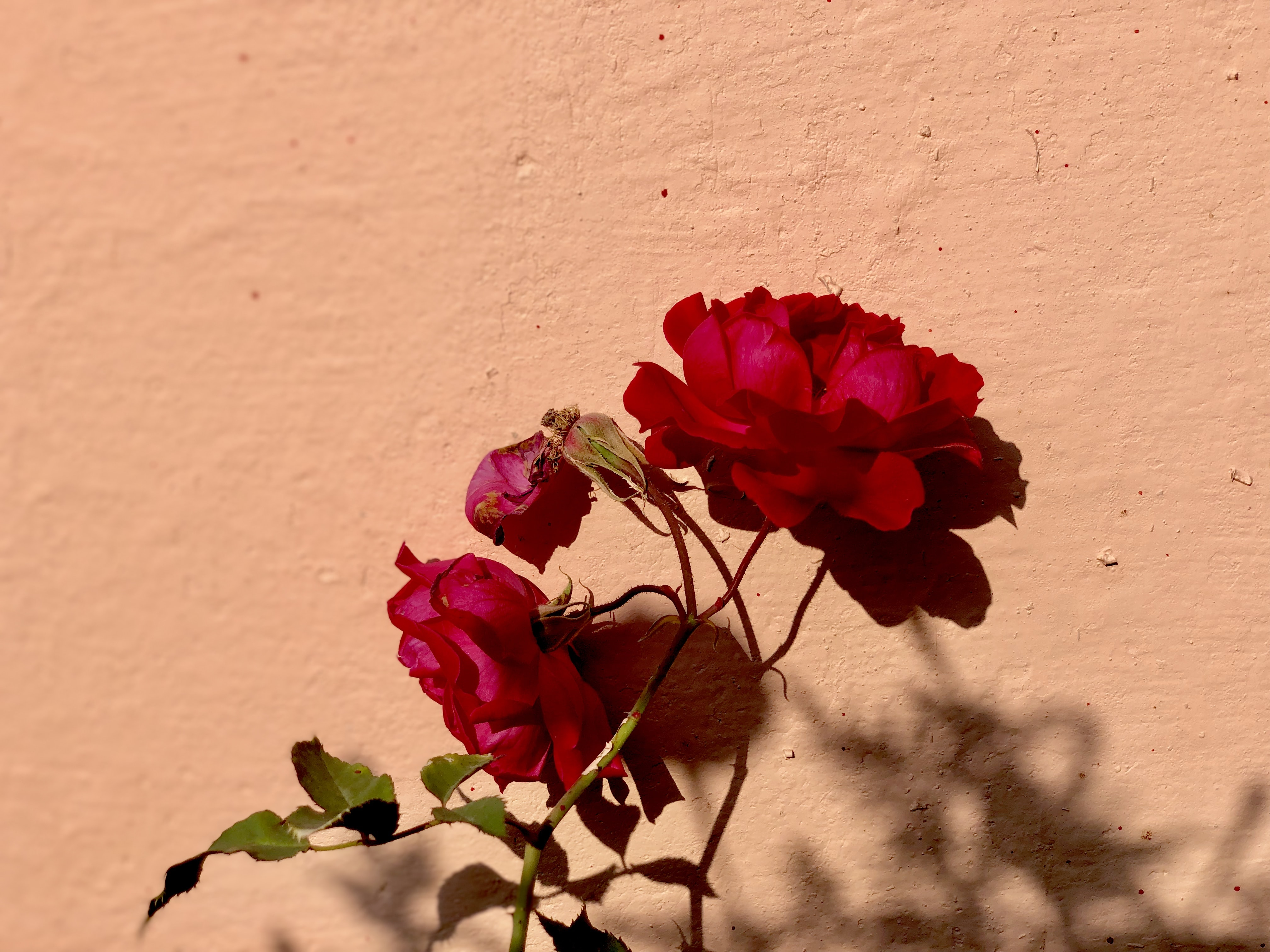red and green petaled flowers