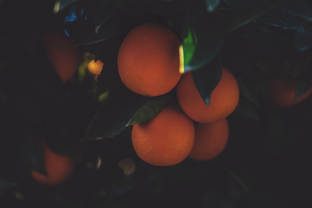 several orange fruits