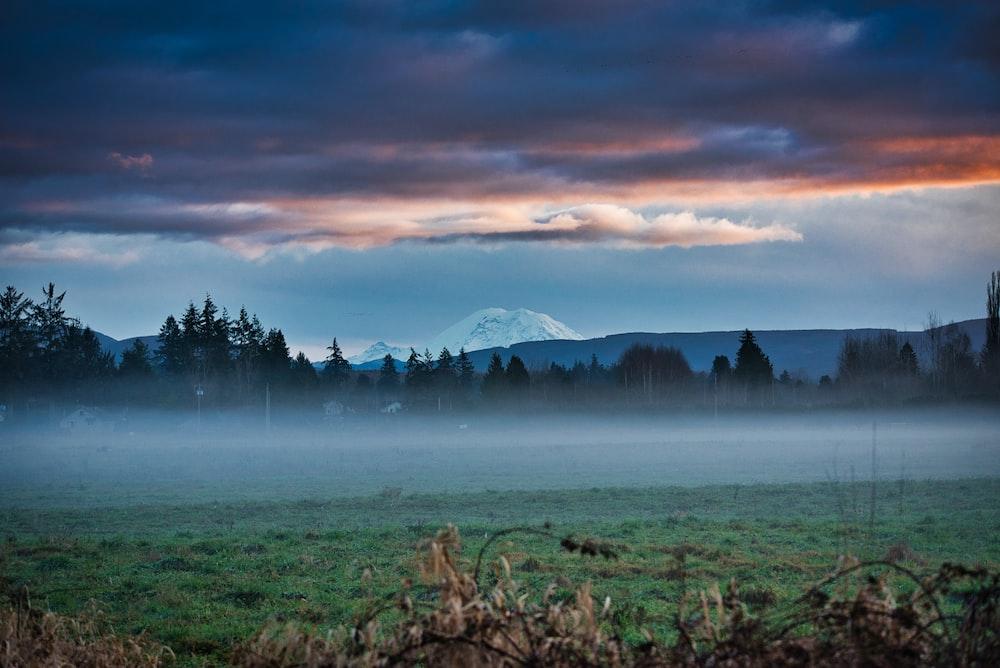 foggy green grass field