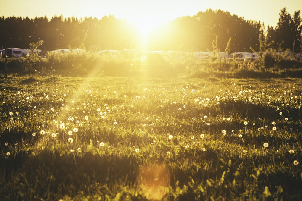green grass with ray of sunlight