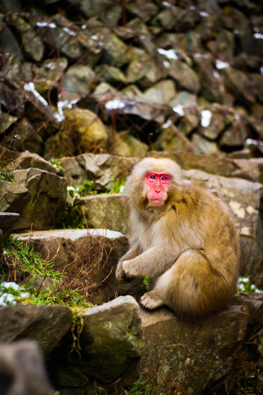 primate sitting on stone