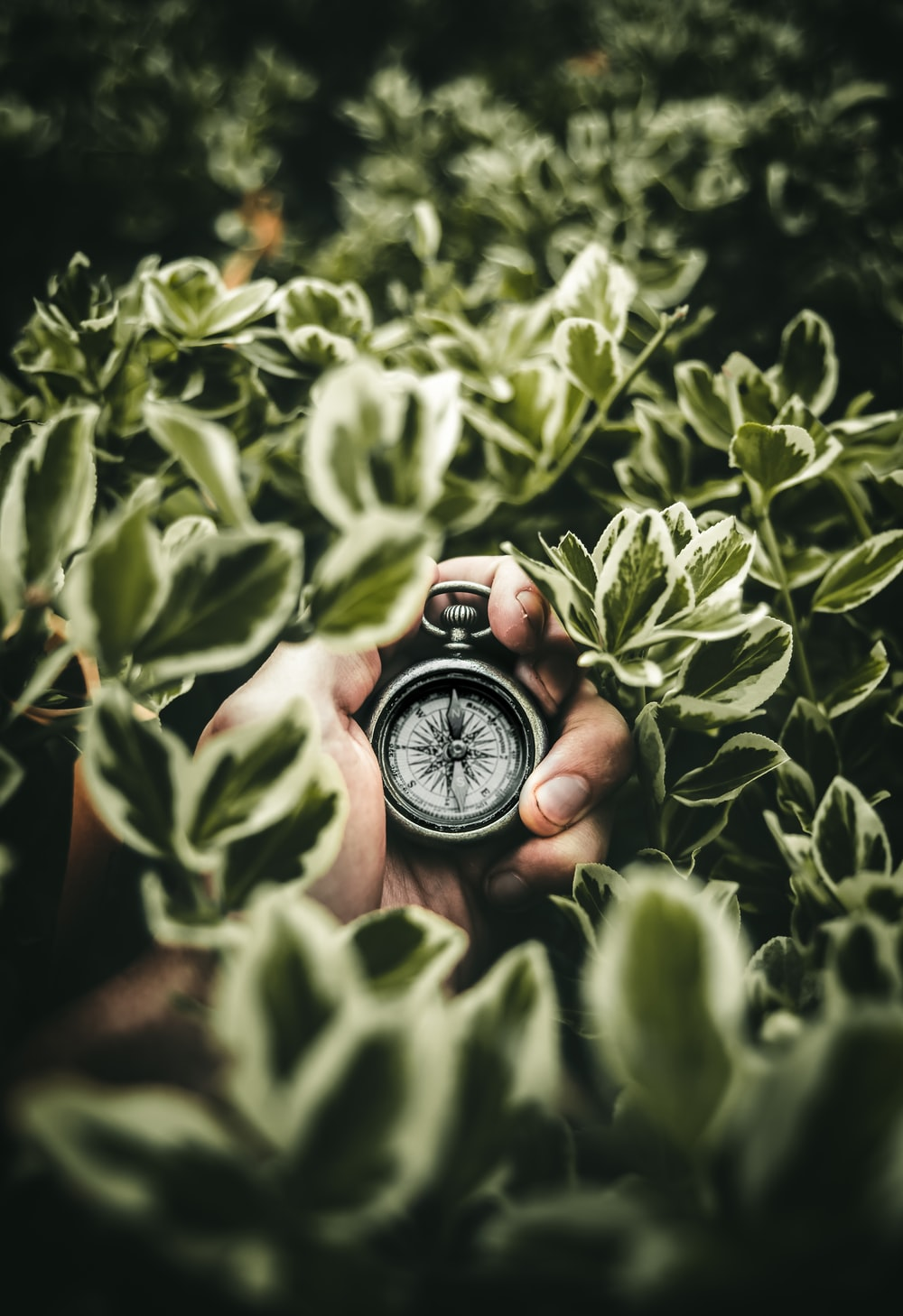 person holding pocketwatch