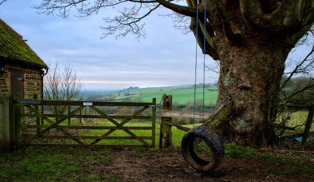 tire swing under tree