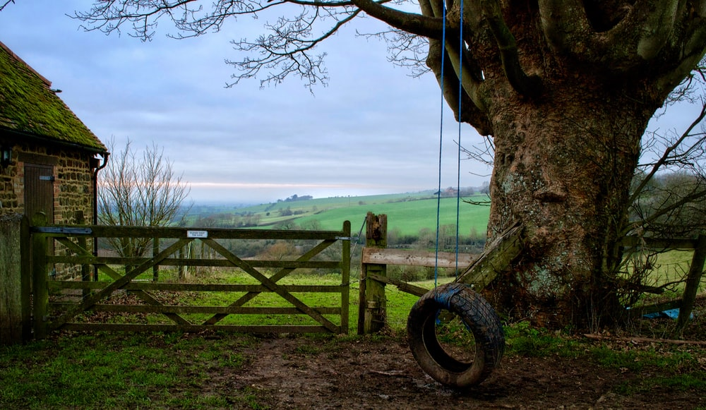 tire swing under tree