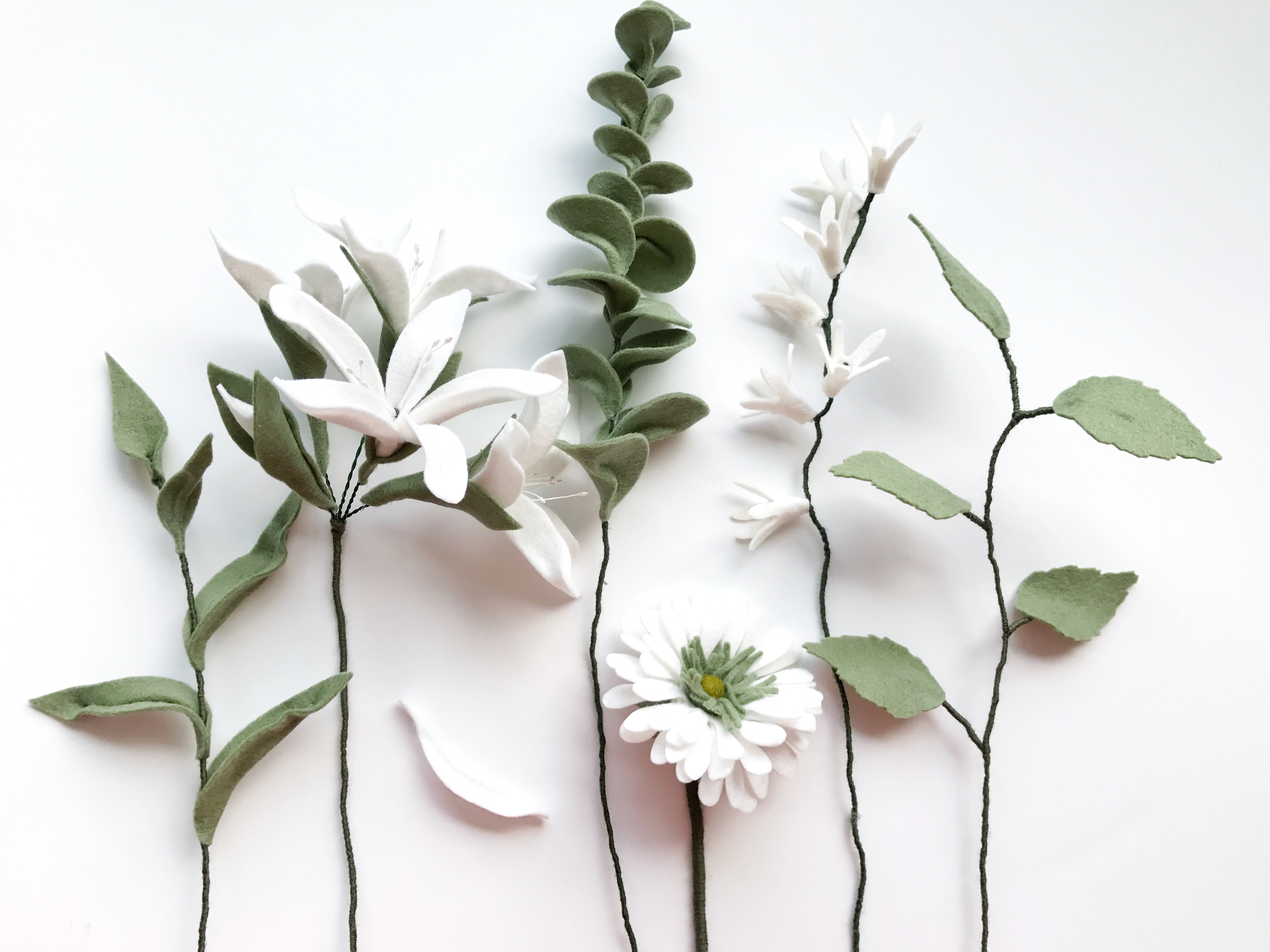 flat lay photography of white-petaled flowers