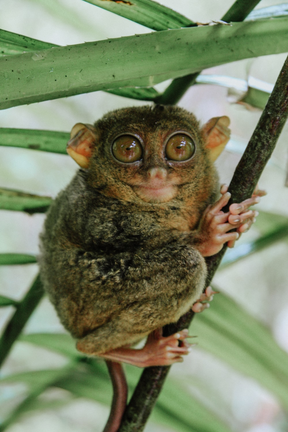 shallow focus photography of brown tarsier