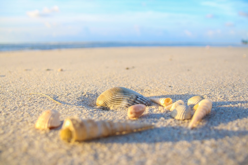seashells on shore at daytime