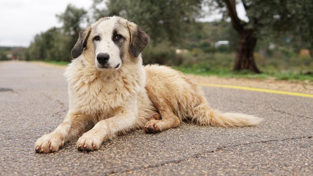 long-coated brown dog near green leaf trees